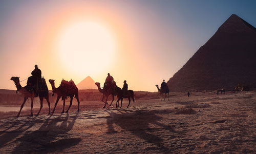 Camels and a pyramid in Egypt